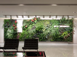 Plantenwand
