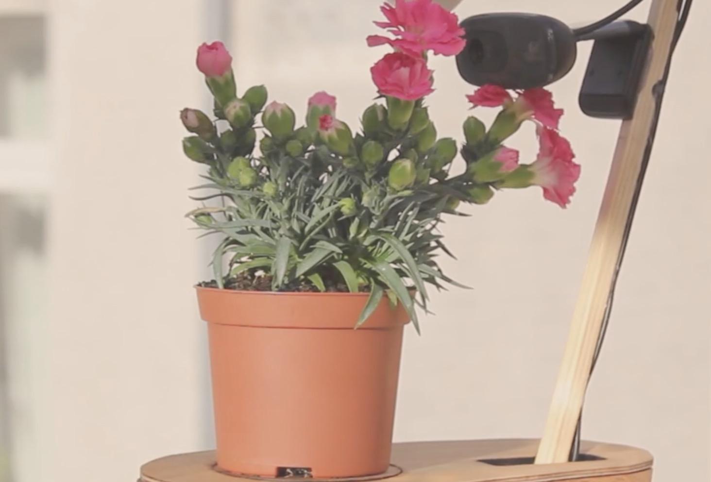 Deze plant maakt zijn eigen… selfies!