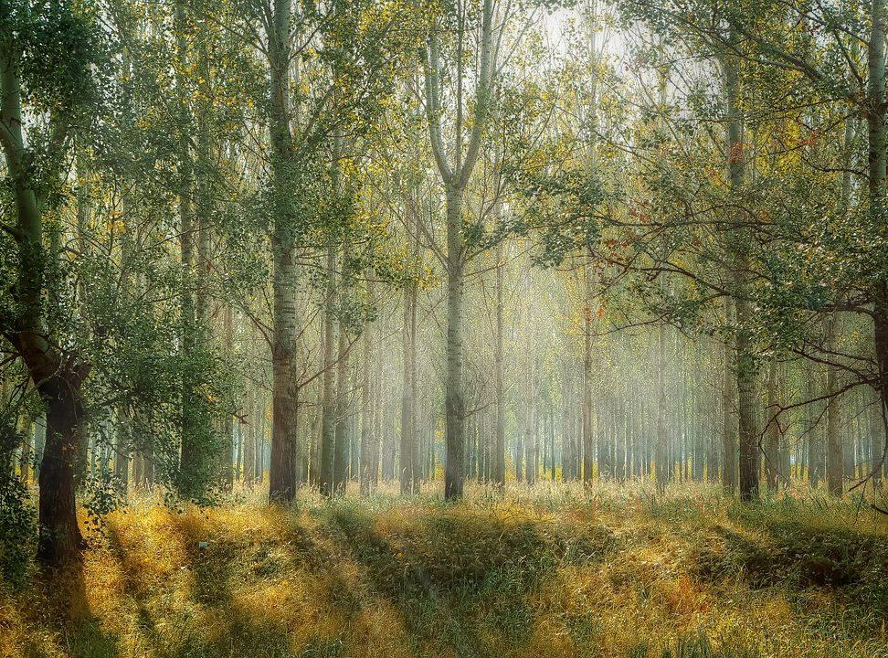 Nieuwe bossen vanwege het klimaat