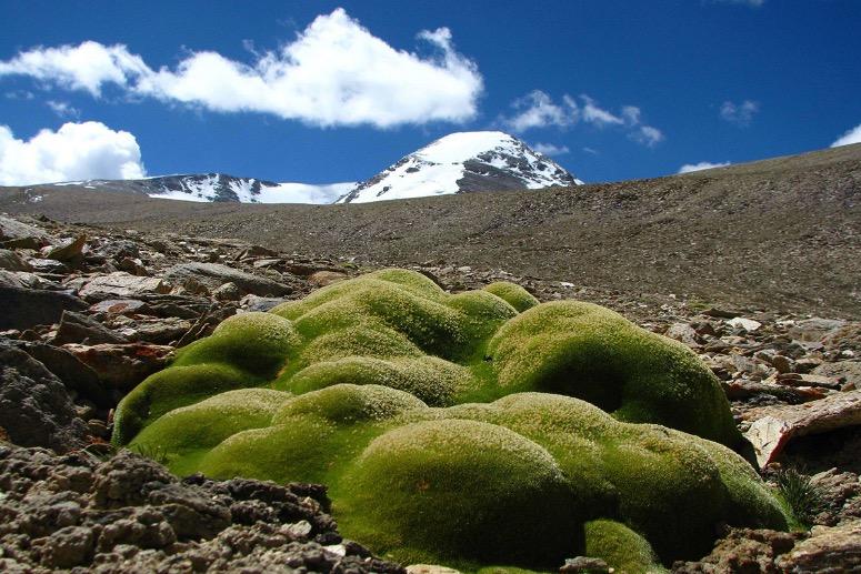 Hoogste planten ter wereld ontdekt op 6km boven zeespiegel