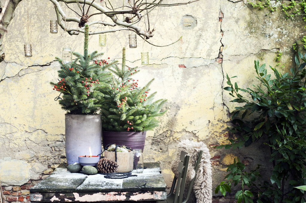 Kerstboom in de tuin green