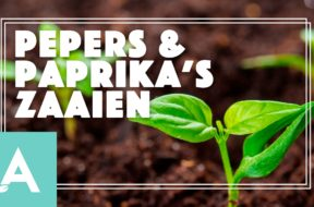 Pepers en Paprikas – Angelo