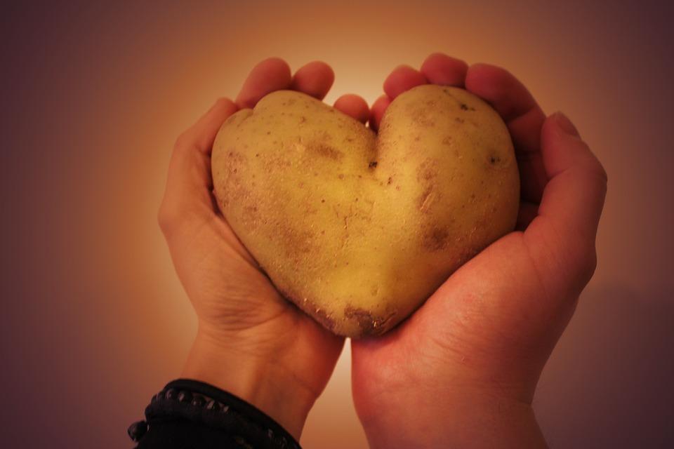 Aardappels kweken in de moestuin en op je balkon!