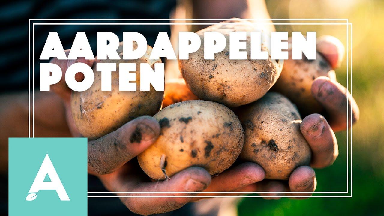 Aardappelen poten! – Grow, Cook, Eat #19