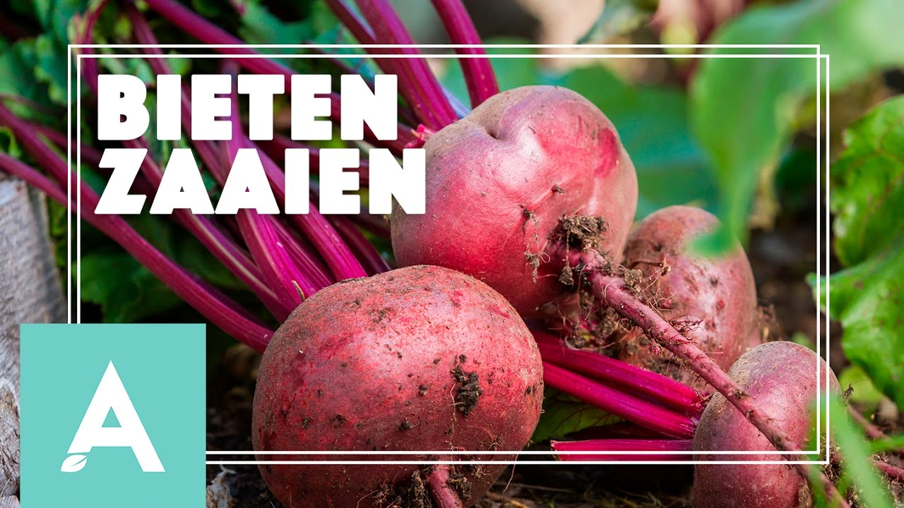 Bieten zaaien! – Grow, Cook, Eat #18