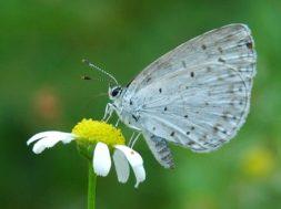 Lepidoptera_001