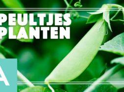 Peultjes planten – Angelo