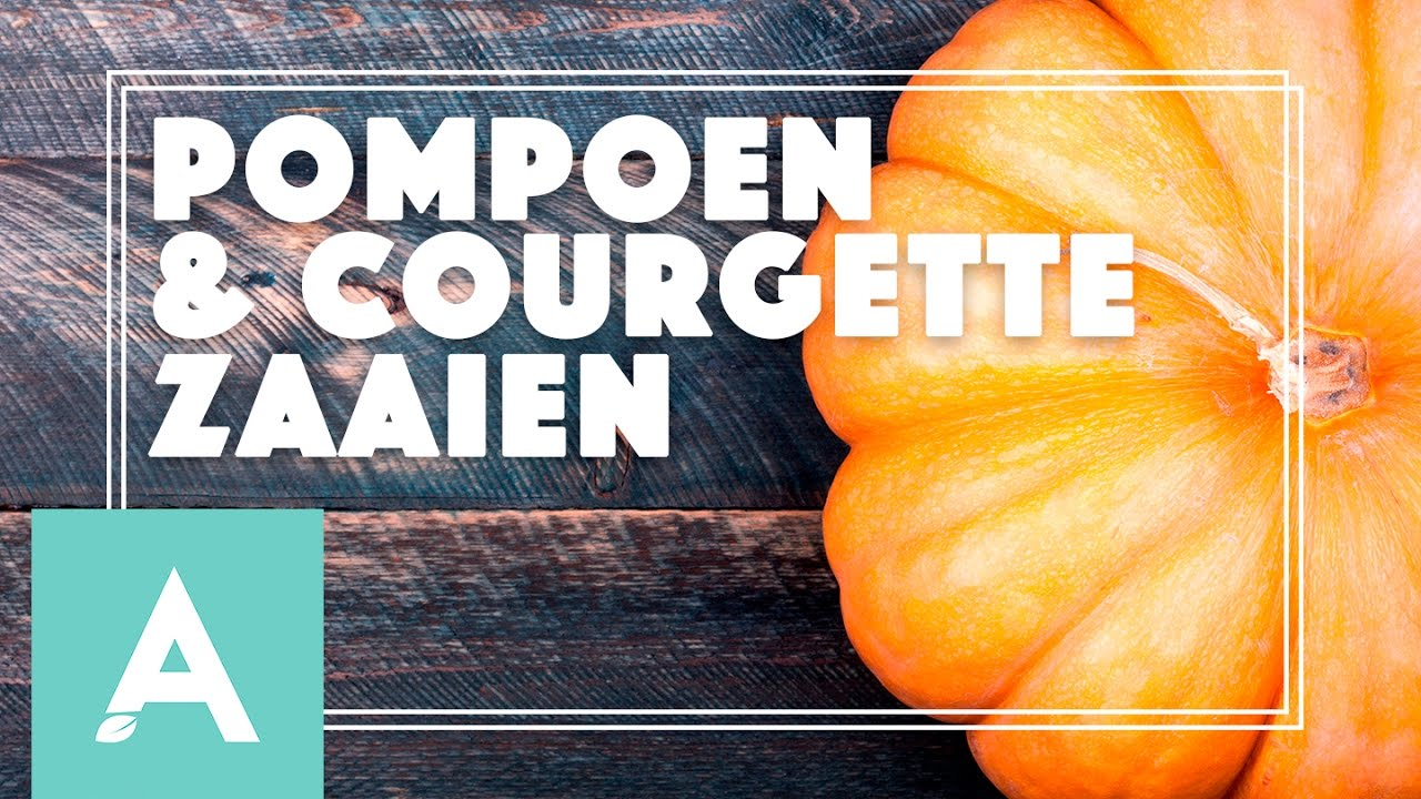 Pompoen en courgette zaaien! – Grow, Cook, Eat #20