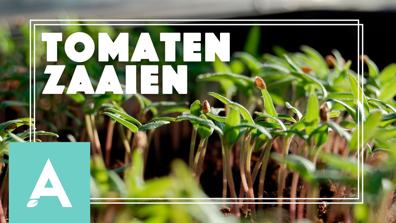 Tomaten zaaien! – Grow, Cook, Eat #9