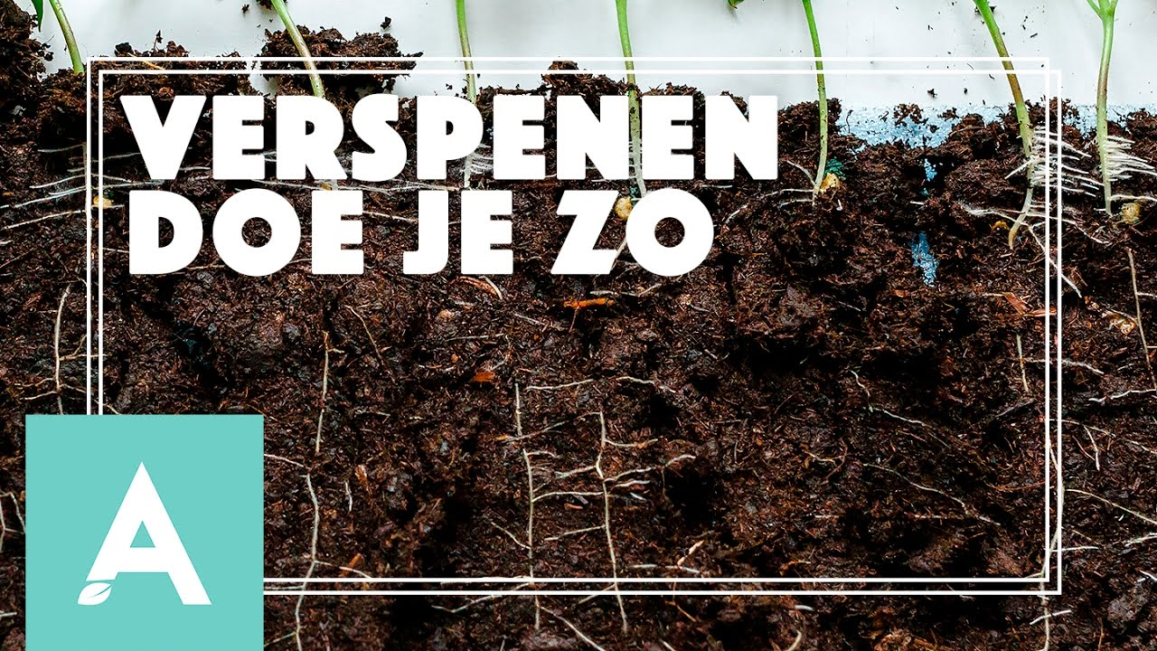 Verspenen doe je zo! – Grow, Cook, Eat #10