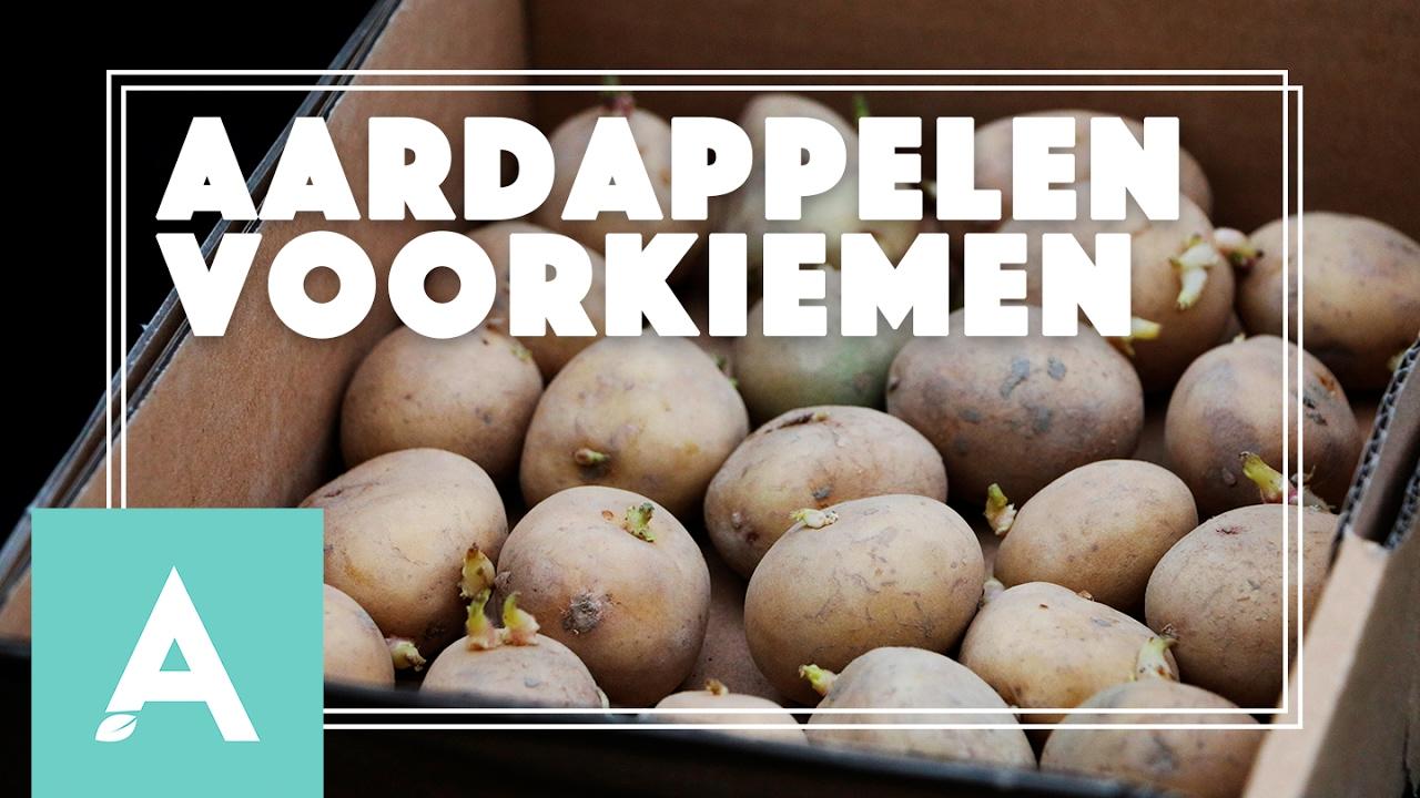 Aardappelen voorkiemen! – Grow, Cook, Eat #4