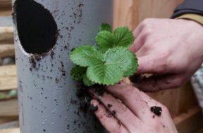 Groene Handen – verticale pvc-tuin.008