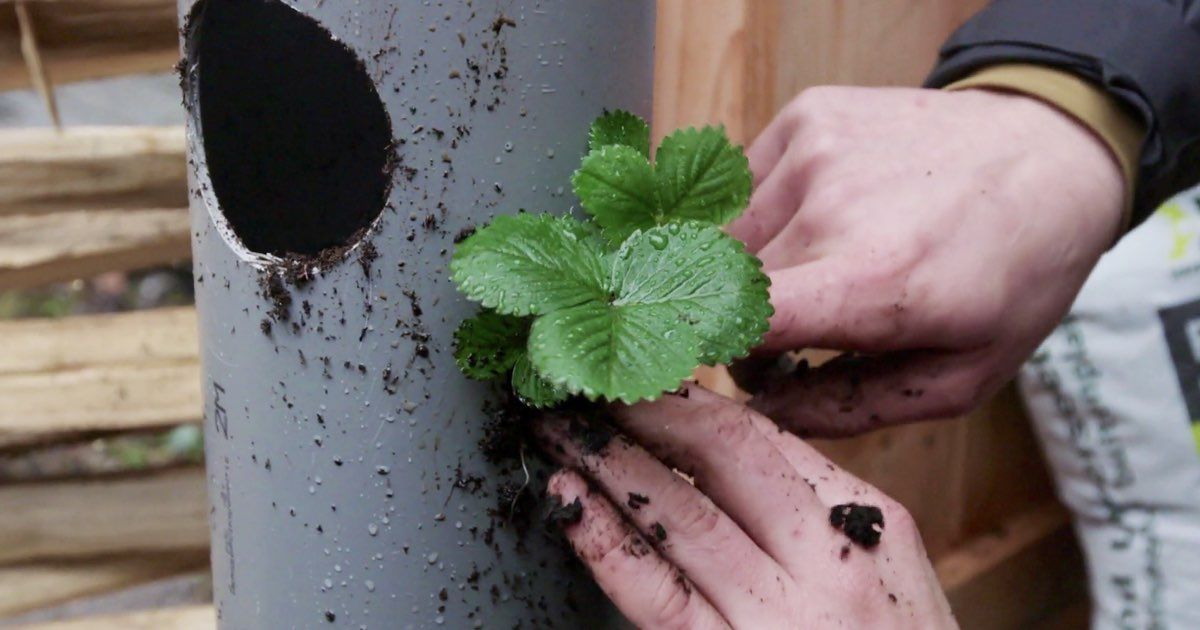 Zelf maken: een verticale planten-buis-tuin!