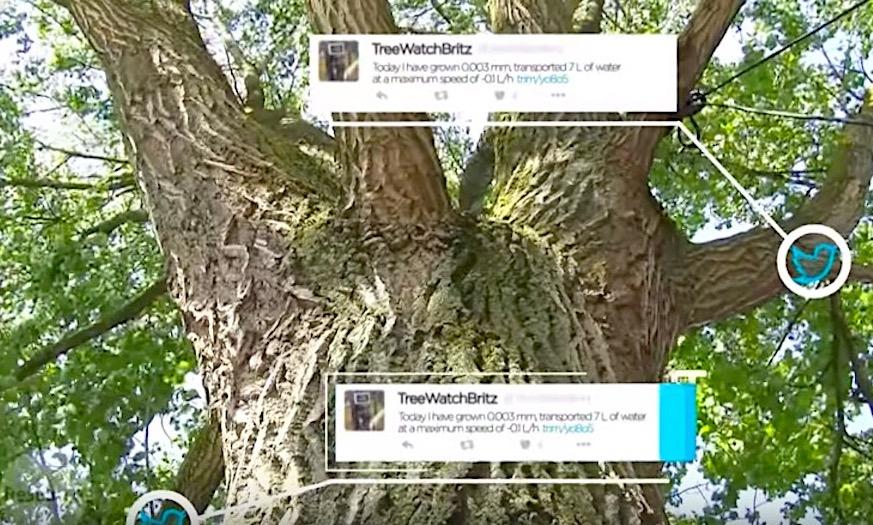 Wageningse boom zit op twitter!