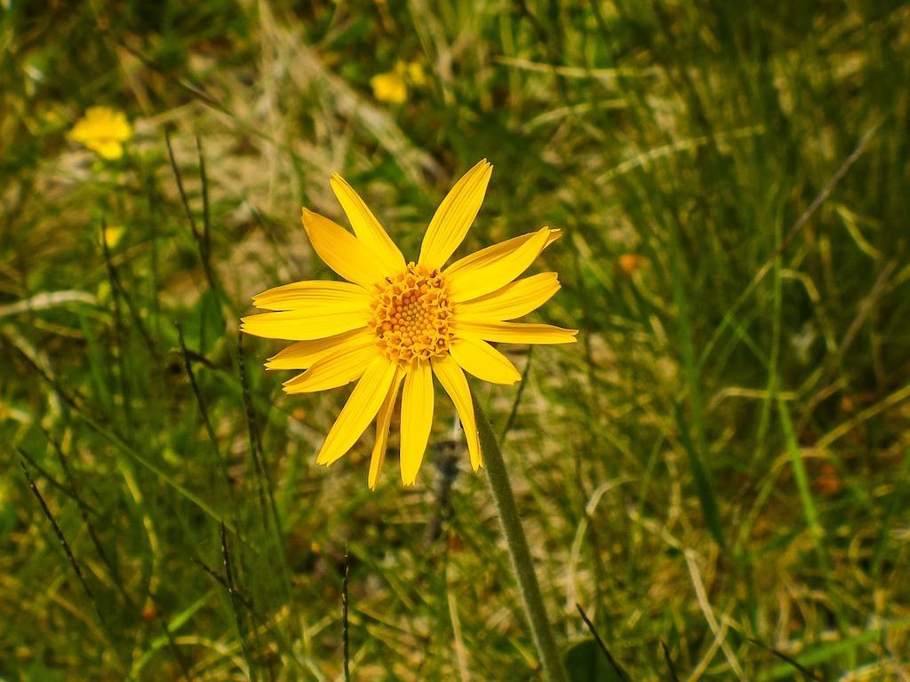 Zeldzame plant ontdekt in de Achterhoek