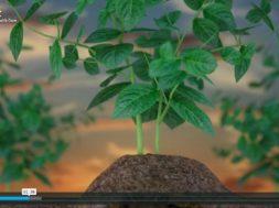 Gezonde bodm, gezonde planten