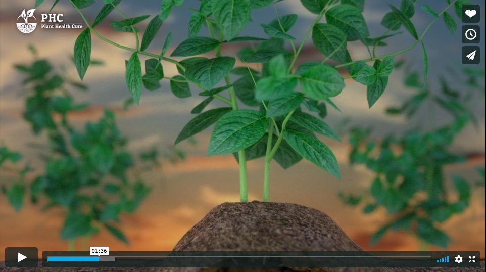 VIDEO: Grond is een levend organisme!