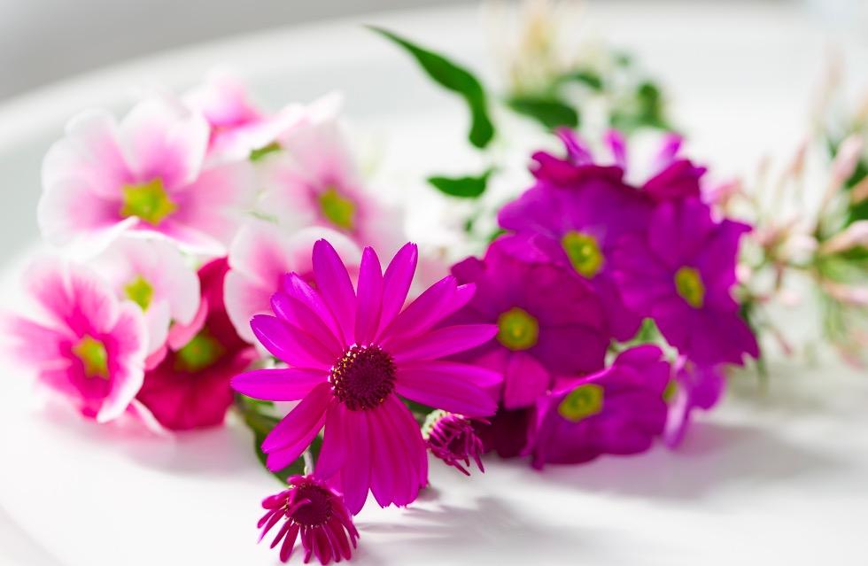 Geur en kleur met winterbloeiers