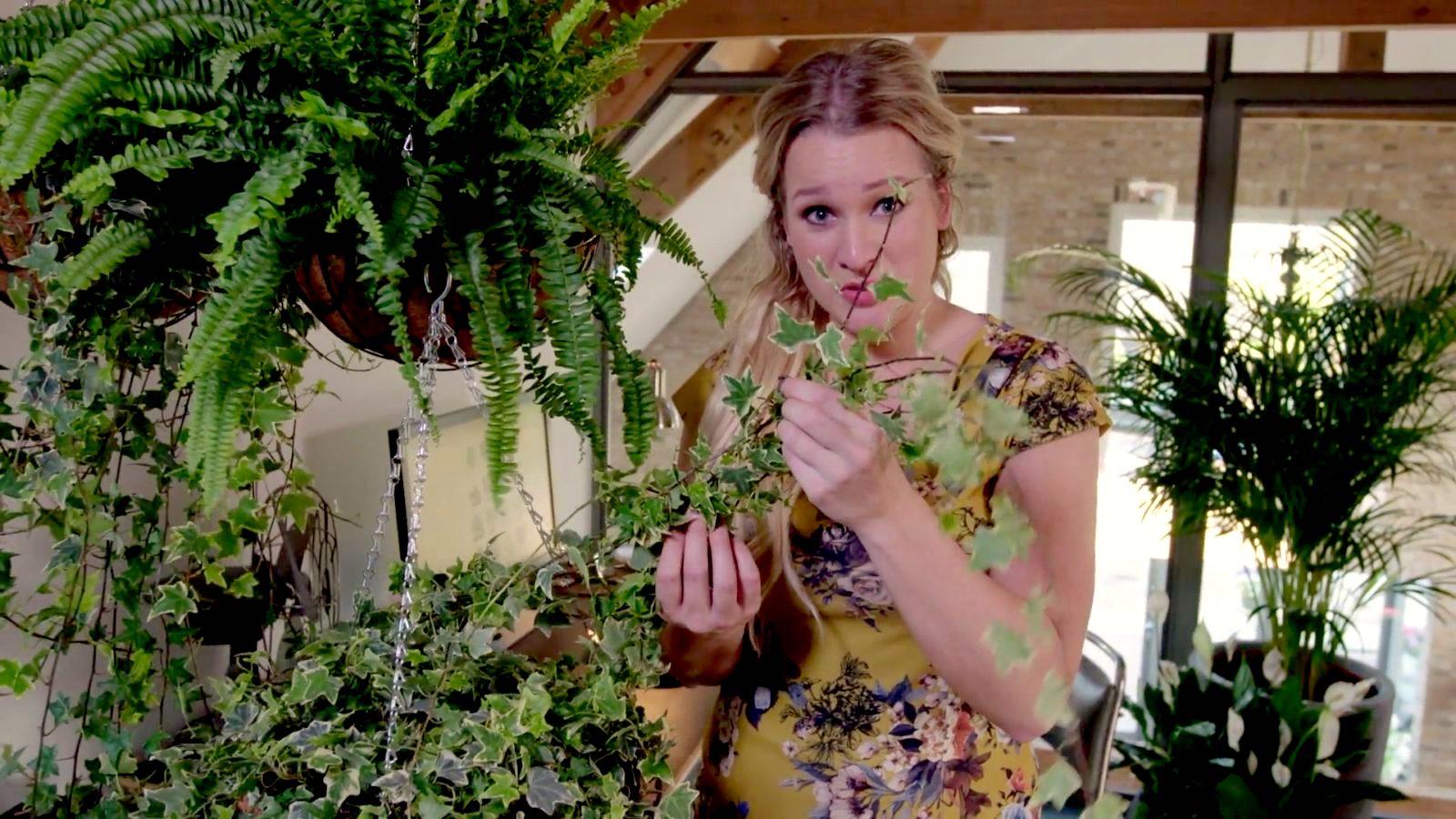 Groen in huis helpt tegen een winterdip!