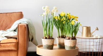 3.voorjaarsbollen_12.narcis_.mid_