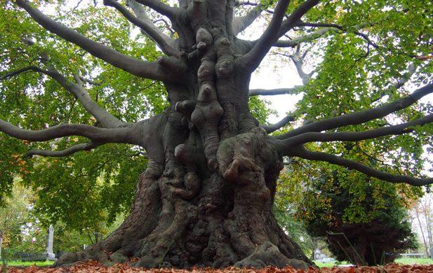 Planten En Bomen : Dit zijn de vijf meest bijzondere bomen van zuid holland 247green.nl
