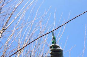 bud_pruning_shears_gardening_cut_hedges_pruning_individually_workers_garden-1288322